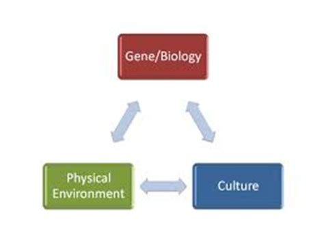 Biological explanations of aggression essays